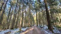 Trailer - Εξερευνούν ένα από τα πιο γνωστά και όμορφα δάση της Ευρώπης.