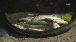 Οι Μαχητές πιάνουν 5 κιλά ψάρια από την πρώτη μέρα