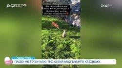 Γιάννα Τερζή: Παίζει με το σκυλάκι της και ένα νεογέννητο κατσικάκι