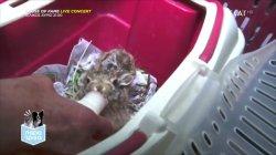 Παρά Τρίχα Επ.16 | Διατήρηση & προστασία άγριων ζώων 27/05/21