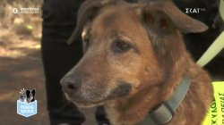 Παρά Τρίχα Επ.17 | Γνωρίζουμε τους σκύλους θεραπευτικής επαφής 29/05/21