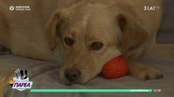 Παρά Τρίχα Επ.4 | Το νομικό πλαίσιο για την κακοποίηση ζώων 18/04/21