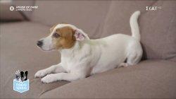 Παρά Τρίχα Επ.6 | Η εκπαίδευση των σκύλων εξελίσσεται σε σχέση ζωής 22/04/21