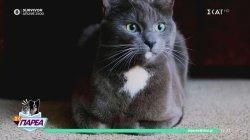 Παρά Τρίχα Επ.9 | Όλα όσα πρέπει να γνωρίζουμε για την υιοθεσία γάτας 09/05/21