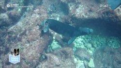 Παρά Τρίχα Επ.18 | Η μεσογειακή φώκια & η προστασία της 02/06/21