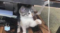 Παρά Τρίχα Επ.12 | Συμβουλές καλής συμβίωσης με γάτες 16/05/21