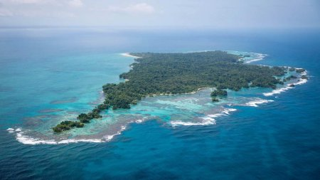 Trailer - Ταξιδεύοντας μέσα από ζούγκλες, ερήμους, οροσειρές, νησιά, αλλά και πόλεις, η σειρά «Planet Earth ΙΙ» αναδεικνύει τις εκπληκτικές στρατηγικές επιβίωσης των ζώων