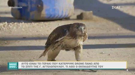 Μαζί Σου Σαββατοκύριακο   Ζήνα: Το γεράκι που καταρρίπτει drones   22/09/2019