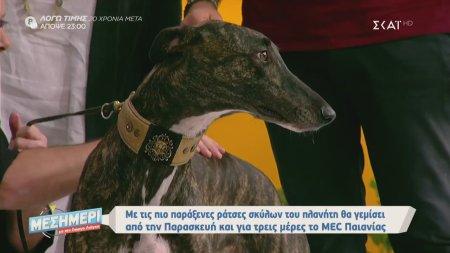 Μεσημέρι με τον Γιώργο Λιάγκα | Οι πιο παράξενες ράτσες σκύλων | 10/10/2019