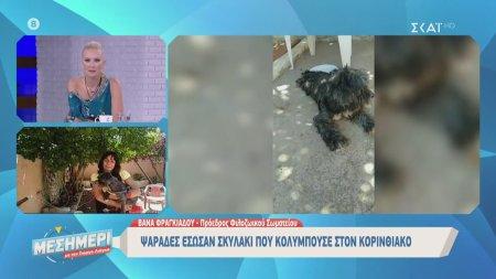 Ψαράδες έσωσαν σκυλάκι που κολυμπούσε στον Κορινθιακό | 23/06/2020