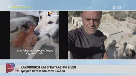 Κακοποίηση και εγκατάλειψη ζώων - Τραγική η κατάσταση στην Ελλάδα