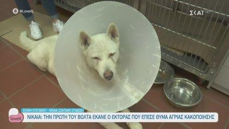 Αναρρώνει ο Έκτορας, το σκυλί που έπεσε θύμα άγριας κακοποίησης