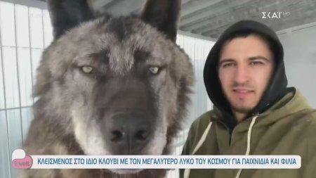 Κλεισμένος στο ίδιο κλουβί με τον μεγαλύτερο λύκο του κόσμου