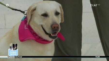 Παρά Τρίχα Επ.8 | Πώς εκπαιδευμένοι σκύλοι μπορούν να βοηθήσουν άτομα με διαβήτη 29/04/21
