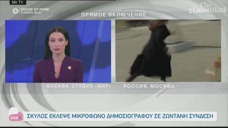 Σκύλος έκλεψε μικρόφωνο δημοσιογράφου σε ζωντανή σύνδεση