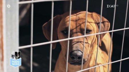 Παρά Τρίχα Επ.3 | Πώς τα ζώα καταφυγίου μπορούν να επηρεάσουν θετικά ευπαθείς ομάδες 10/04/21