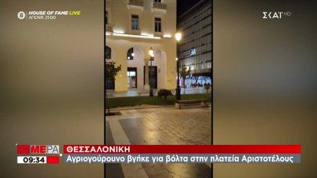 Θεσσαλονίκη: Αγριογούρουνο
