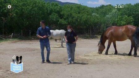 Παρά Τρίχα Επ.22 | Ο ιδιαίτερος κόσμος των αλόγων & η προστασία του 13/06/21